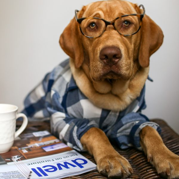 dog reading the paper with glasses and coffee
