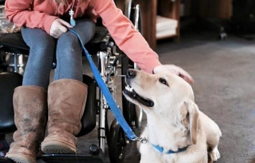 Child in wheelchair with service dog