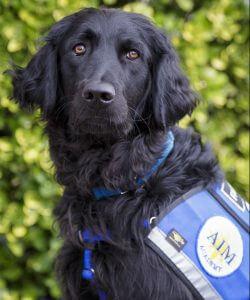 facility dog at aim academy