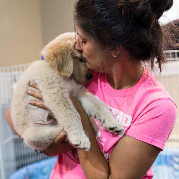 golden retriever puppy receiving a kiss