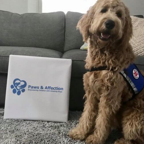 Rosie: Ambassador Dog
