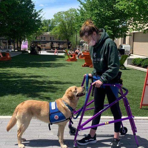 Sammi: Service Dog